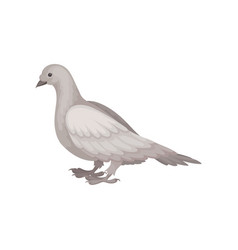 Flat icon of gray dove side view bids vector