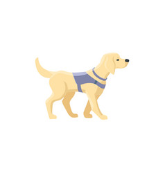 Labrador guide dog for blind people vector