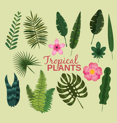 set tropical leaves plant tropic leaf vector image
