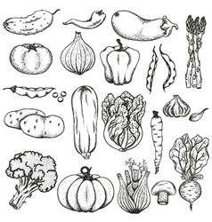 Big collection of vegetables vector image