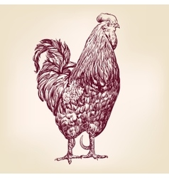 chicken hand drawn llustration realistic vector image