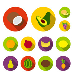 Different fruits flat icons in set collection for vector