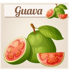Guava fruit Cartoon icon vector