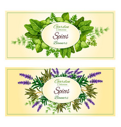herbal spices herbs banners set vector image
