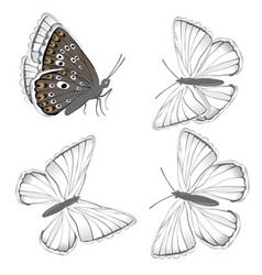 set white butterflies lycaenidae isolated on vector image