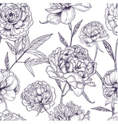 beautiful peonies seamless pattern hand drawn vector image