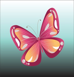 Colorful Butterfly isolated vector image