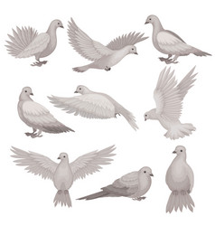 Flat set of dove bird with small head vector