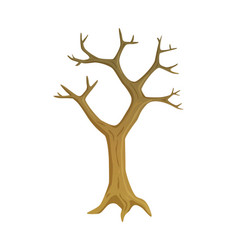 leafless plant tree with empty branches vector image