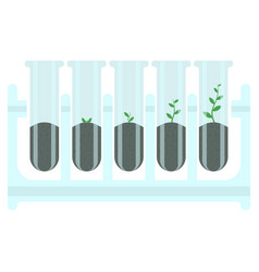 stages of plant growth in test-tube vector image
