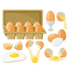 cartoon chicken eggs fresh boiled fried eggs vector image