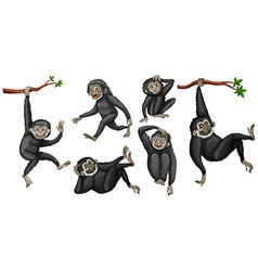 Gibbon set vector