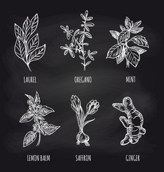 Herbs and spice on blackboard vector