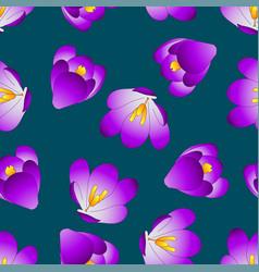 Purple crocus flower on blue indigo background vector