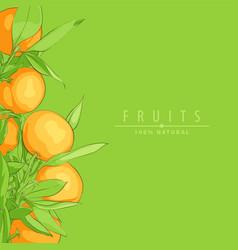 Ripe fresh oranges vector