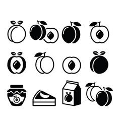 Peach apricot fruit icons set vector image