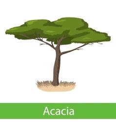 Acacia cartoon tree vector image