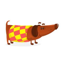 Cartoon funny dachshund dog wearing a sweater vector