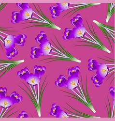 Purple crocus flower on pink background vector