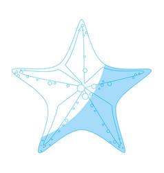 Sea star isolated vector