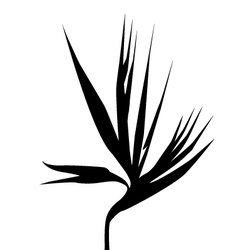 birds of paradise flower silhouette vector image vector image