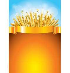 wheat golden background vector image