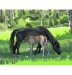 Horse with a foal on the meadow in the woods vector