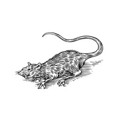 rat or mouse wild animal engraved hand drawn vector image