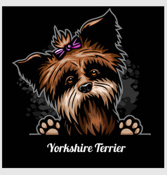 Yorkshire terrier - peeking dogs - breed face head vector