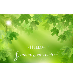 Forest fresh green leaves with sun rays spring vector