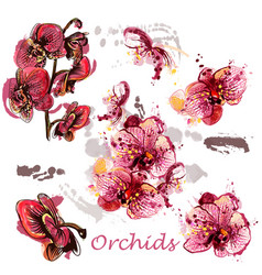 Set of orchids drawn in watercolor style vector