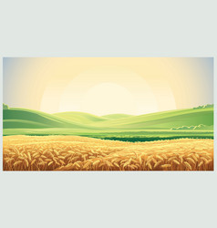 summer landscape with a field ripe wheat and vector image