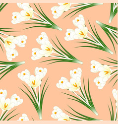 White crocus flower on light orange background vector