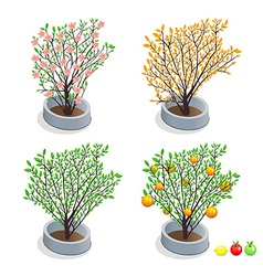 Trees in pots vector image vector image