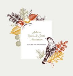 autumn design card vector image