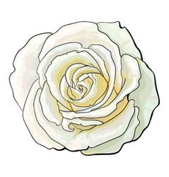 Deep white rose top view isolated sketch vector