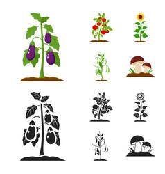 Eggplant tomato sunflower and peasplant set vector
