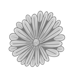 floral botanical flower grey ornament vector image