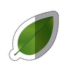 Sticker realistic green leaf with branch nature vector