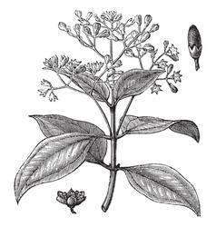 True cinnamon vintage vector image vector image