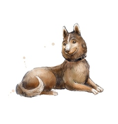 Brown mongrel watercolor brown mongrel vector
