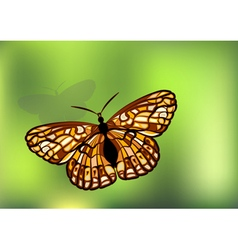 Checkerspot on green vector image