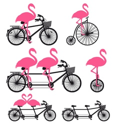 Flamingos on bicycle set vector