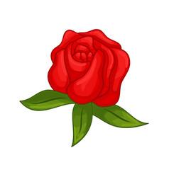 Floral botanical flower ornament red rose vector
