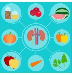 Infographics of food helpful for healthy kidney vector