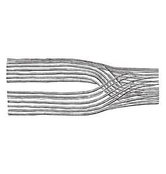 Nerve filaments vintage vector
