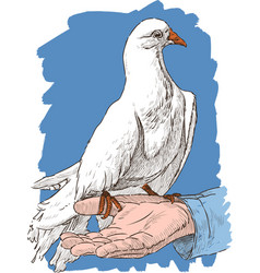 White pigeon on a hand vector