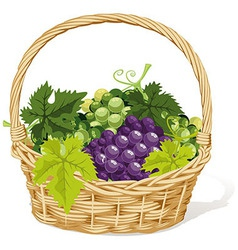 wine basket vector image