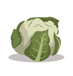 Cauliflower nutrition healthy image vector