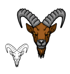 Head goat or ibex with ridged horns and beard vector